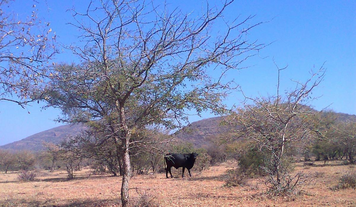 Fauna Park Tales - An African Adventure