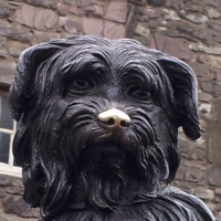 My Fascination:  Bobby the Skye Terrier