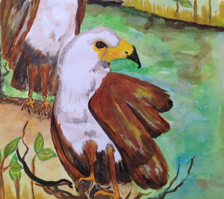 A pair of African fish eagles support the Fauna Park Promise.
