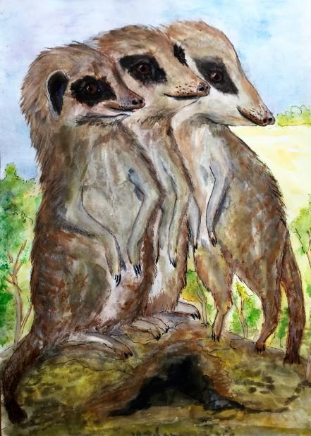 Inquisitive meerkats