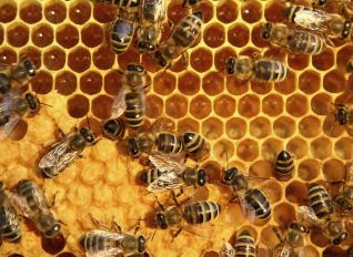 GettyImages-115948200-56a520195f9b58b7d0daf1f1 honey and bees wax