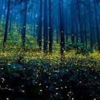 Short Story - Forest Stars 2 - Maretha Botha