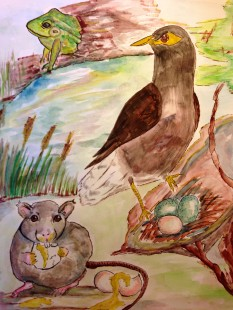 A Frog, A Rat and a Cheeky Mynah