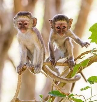 Monkey children