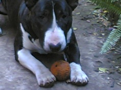 DOGS DURBAN HOUSE JACK 2006-06-19 14.56.35