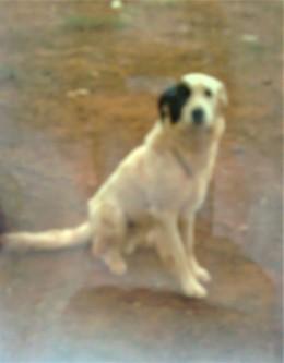 DOGS Fonty 011