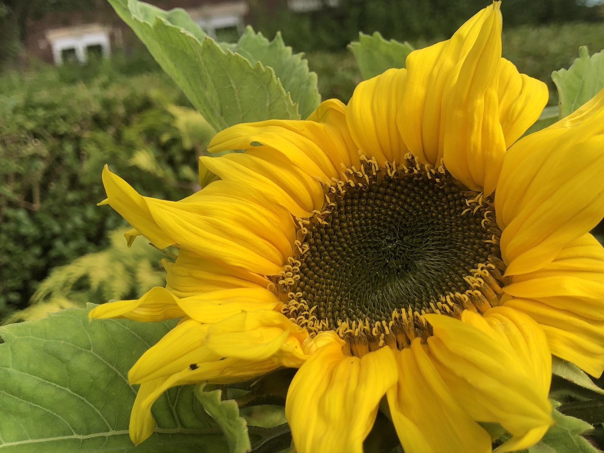 5 August – Summer Garden Glimpses – Wonderful Wednesday – #FaunaParkTales