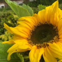 5 August - Summer Garden Glimpses - Wonderful Wednesday - #FaunaParkTales