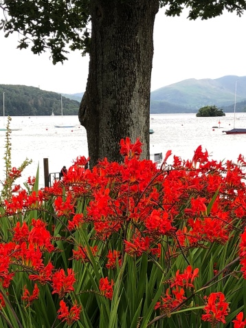 Crocosmia in the Lake District