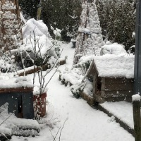 Wonderful Wednesday - #Garden Glimpses - #Snow, #Pebbles #Decking
